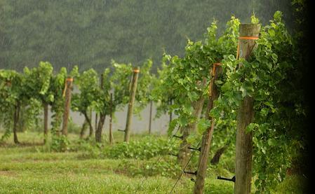 Habersham Winery and Vineyard